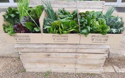 Launching Weekly Veggie Boxes