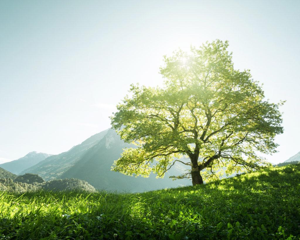 kerrys-tree-calabasas