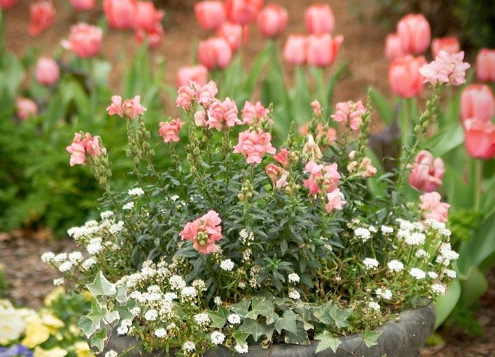 resi-flower-img1