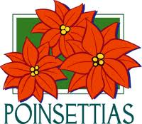 This image has an empty alt attribute; its file name is poinsettia2.jpg