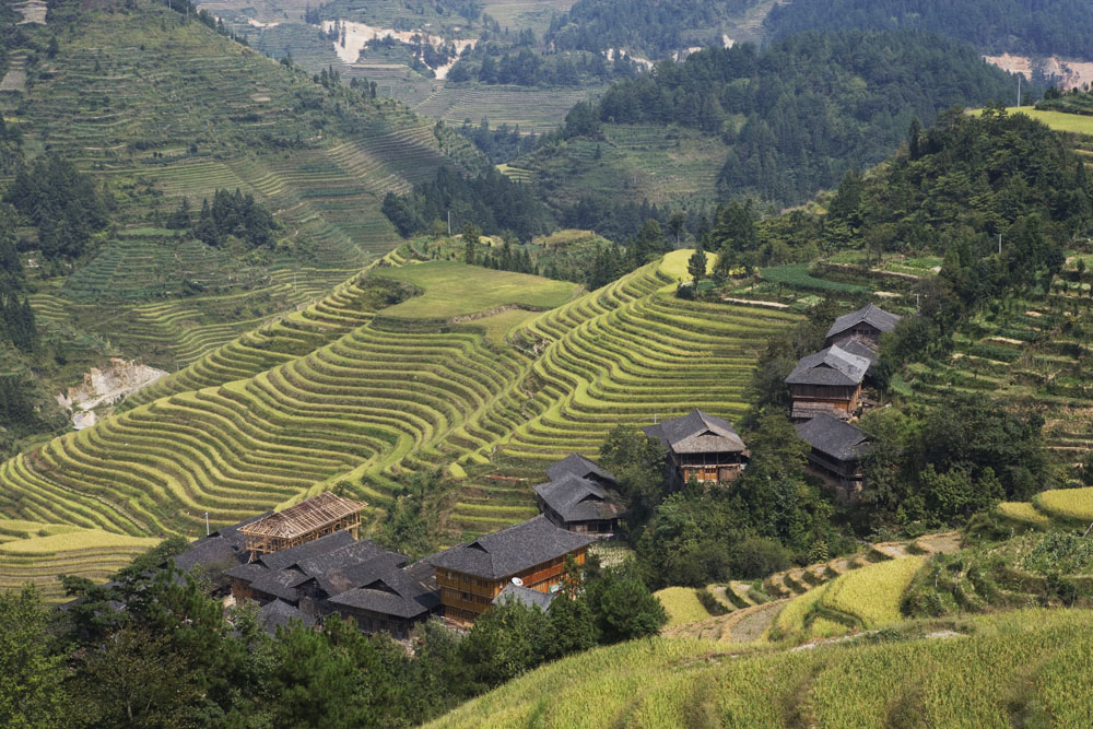 shutterstock_27243238 Guangxi, Guillin, Longsheng terraced rice fields