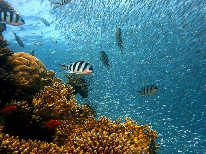 How Important are Coral Reefs, Really?