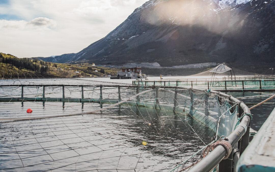 Consulting Aquaculture
