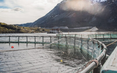 Growing Seafood Demand