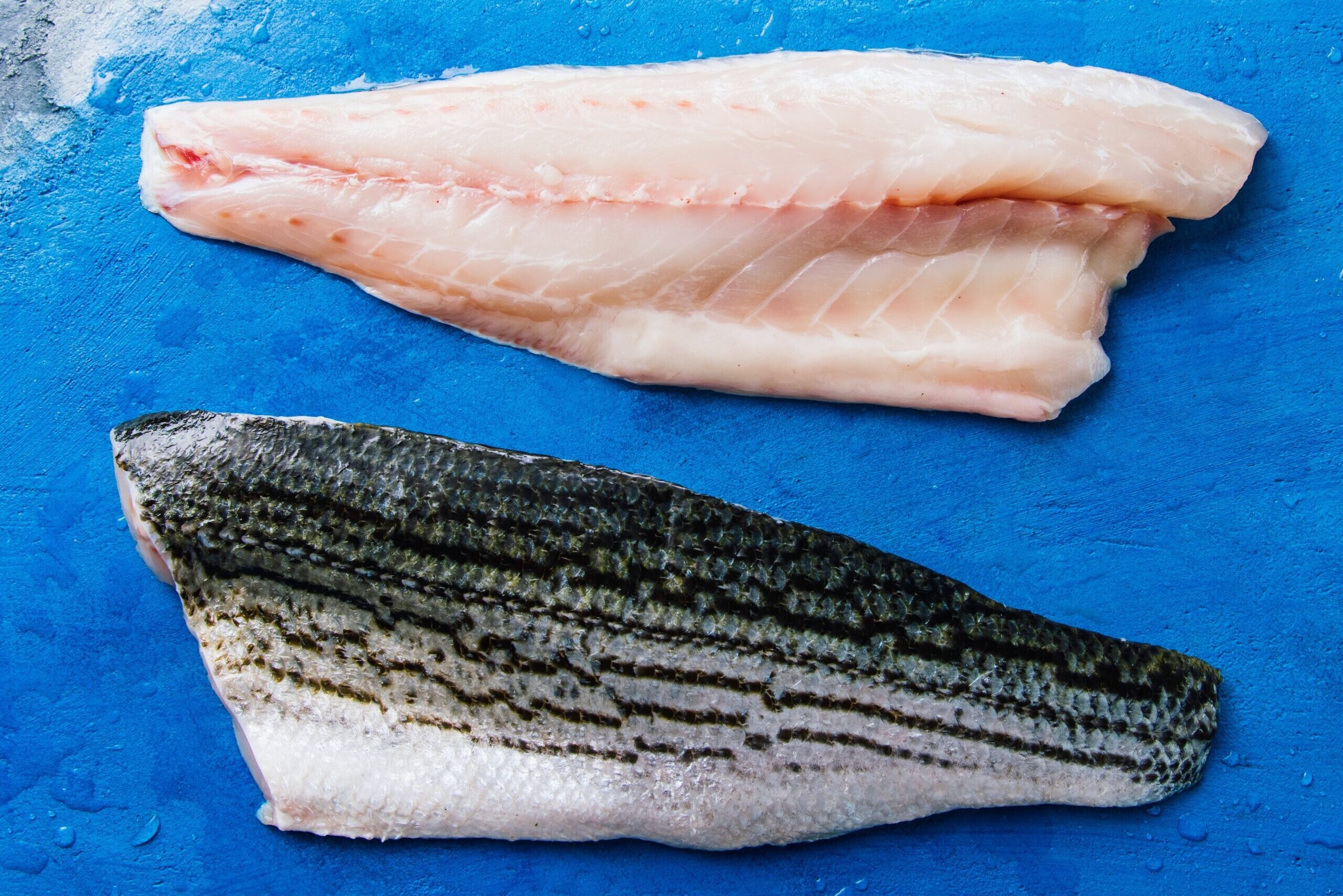 Pacifico Striped Sea Bass