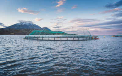 5 Farmed Fish Myths to Stop Believing