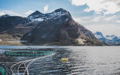 The 4 Main Ways to Sustainably Farm Fish