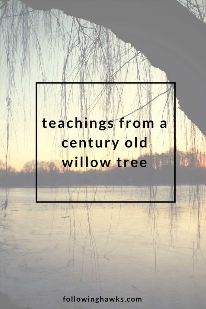 Willow Tree | Totem | Reiki