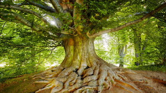 Trees | Energy Healing | Trauma