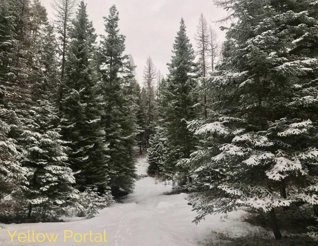 Yellow Portal | Montana Portals