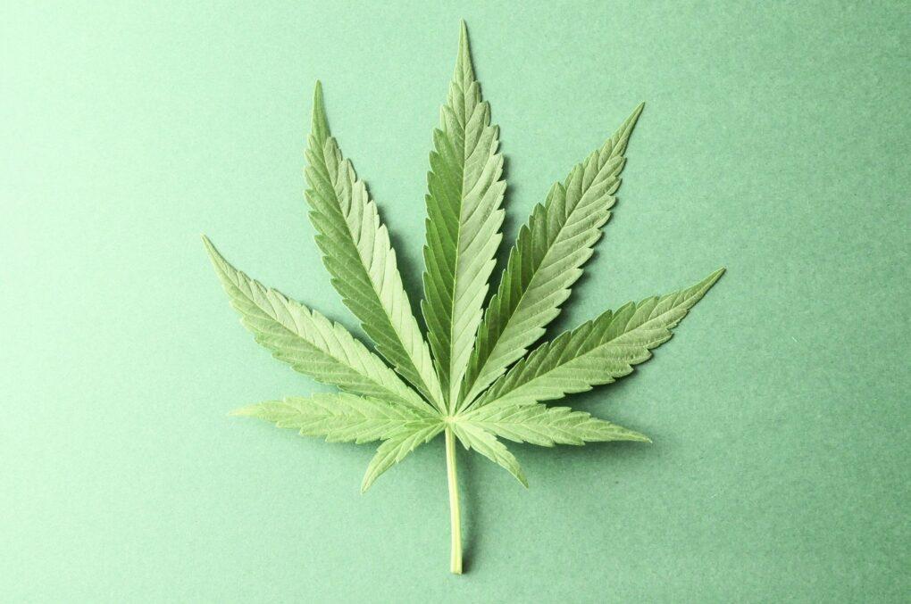 Medical Marijuana Doctor Westwood