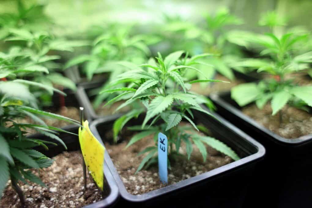 Medical Marijuana Card Doctors Spring Hill Florida