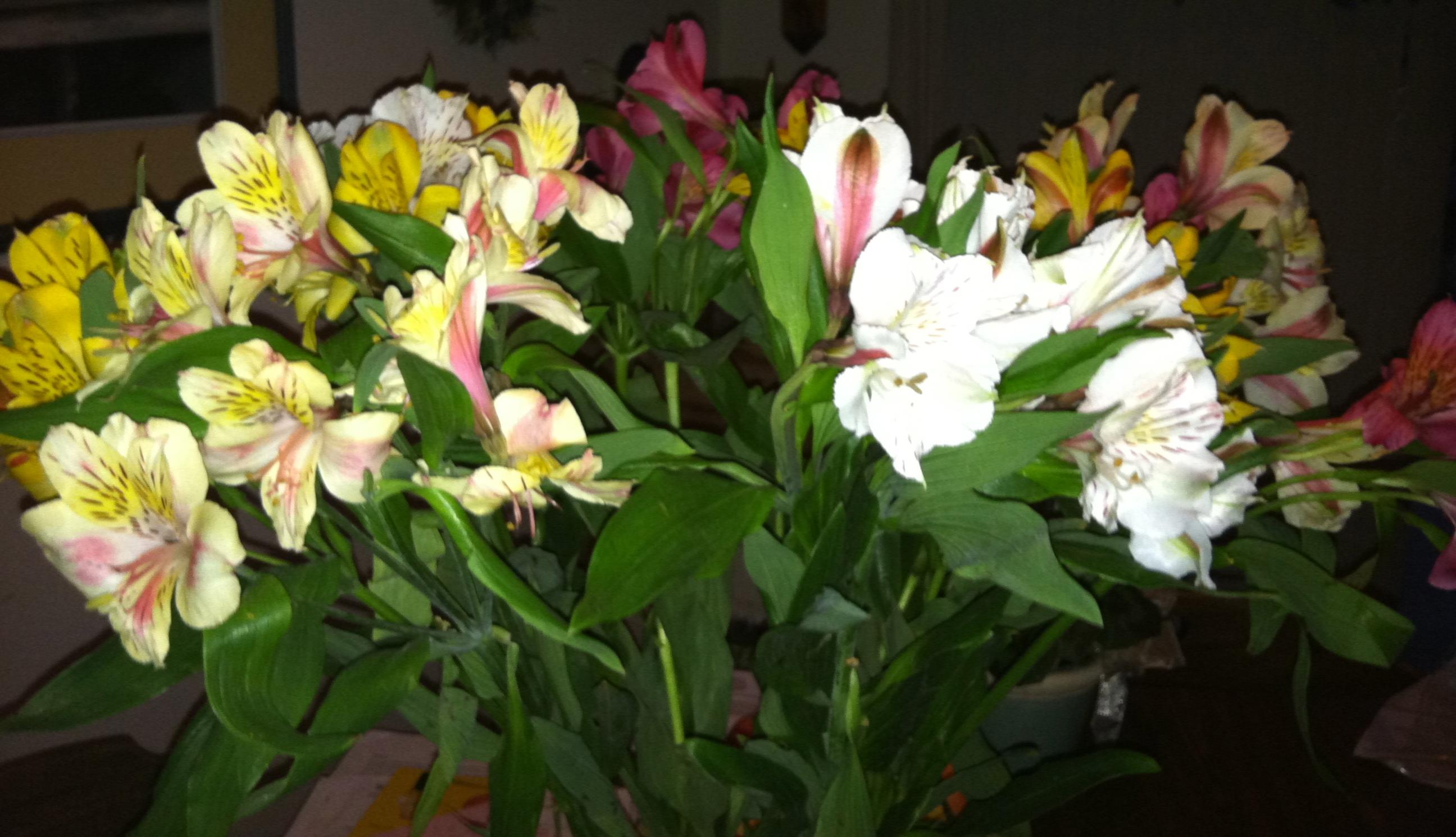 flowers 1.20