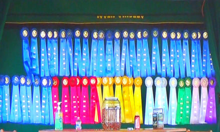 Chasing Points. Show Jumping Competitions & Riders