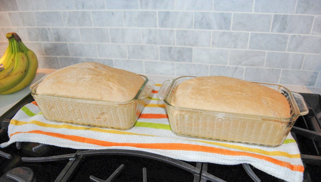 whole wheat bread rising
