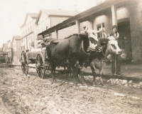 An Oxmobile. In 1875 a team of oxen pulling a wagon in front of Schuette Brothers store grain warehouse on a muddy Jay Street. The man standing with the oxen is likely Fred Wilke of Two Rivers, Wisconsin, the owner of the team.    (source://wisconsinhistory.org)