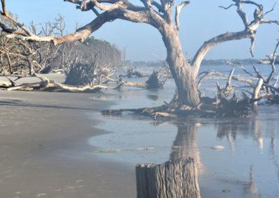 Driftwood Island