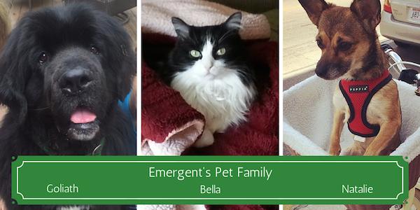 Emergent pets