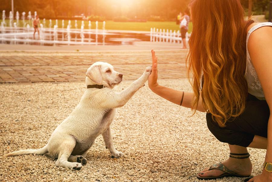 Pet Parent and Puppy