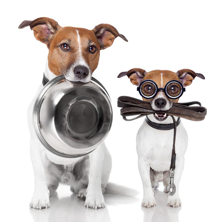 Simple, clear, concise communication needed in pet care business