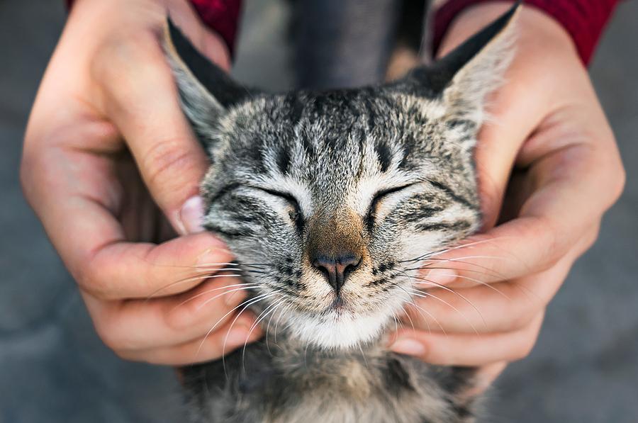 Pet brand sameness works against brand engagement
