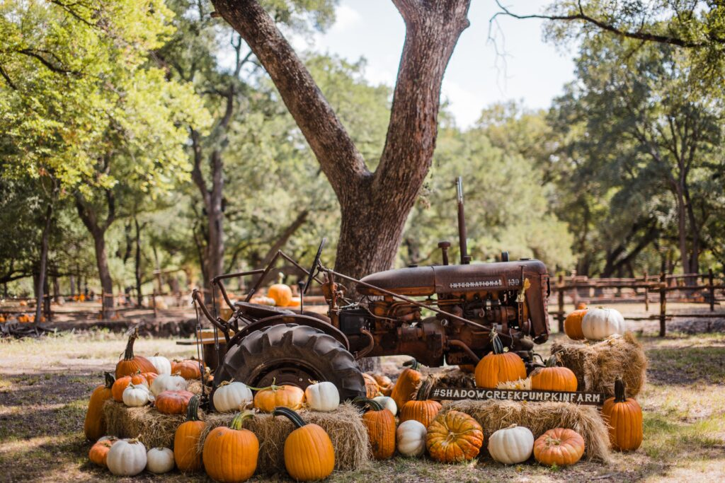 From wagon rides to corn mazes, petting farms and more, this list of the 11 best pumpkin patches in California is the perfect way to kick off the fall season.