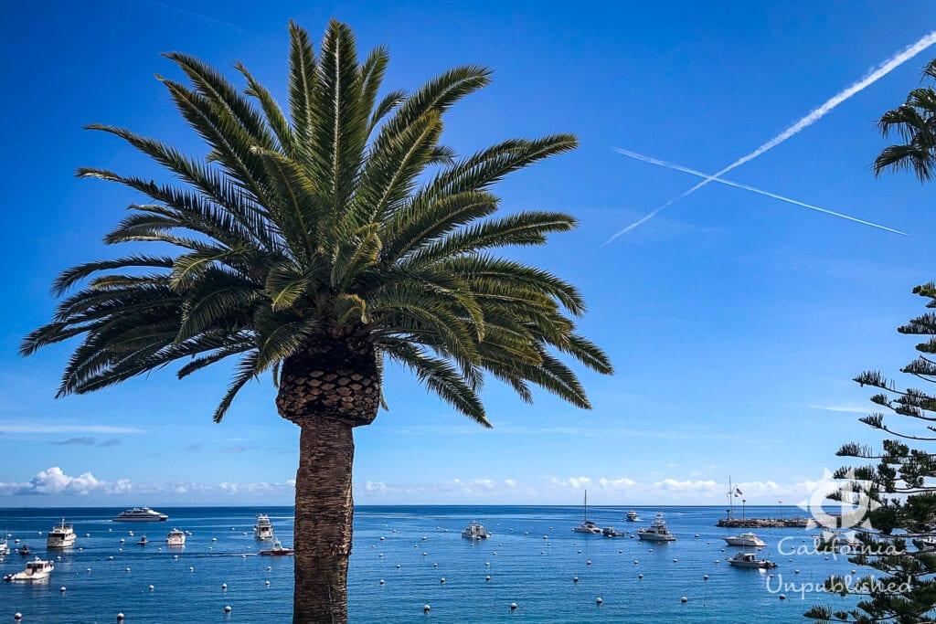Santa Catalina Island - The Ultimate Family Adventure Getaway 6