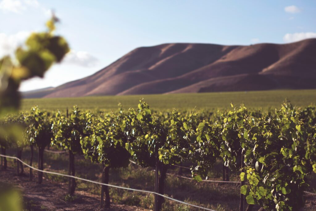 Family-Friendly Destinations in the Santa Maria Valley