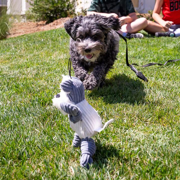 Adopt and Shop at the Pet Food Express Virtual Pet Fair