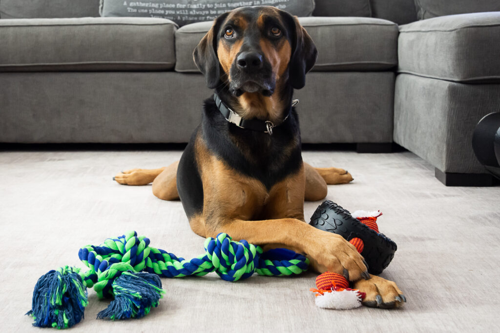 The Pet Food Express Virtual Pet Fair is Here!