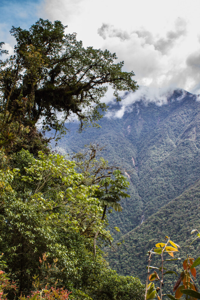 Bosques del Putumayo