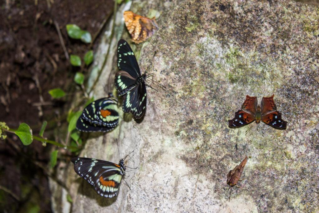 Saladero de mariposas