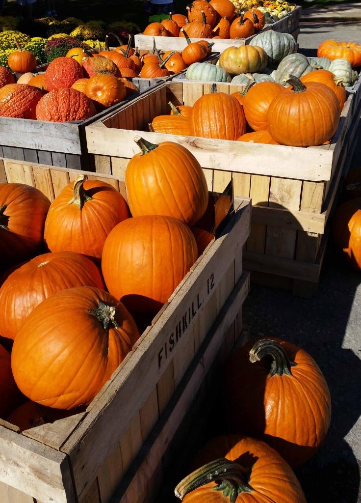Pumpkins at Fishkill Farms