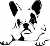 2-french_bulldog
