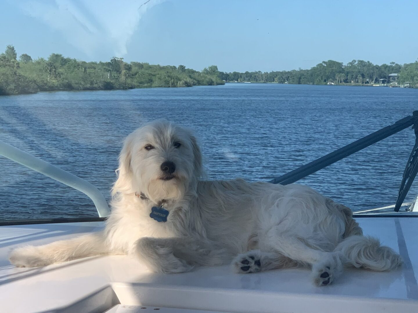 Living On A Boat With A Dog