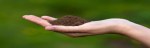 Read more about the article PROTECT YOUR SOIL