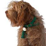 Perro-Verde-turquesa-2.jpg