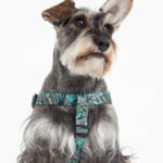 arnes-hojas-verdes-perro