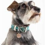 collar-hojas-verde-perro