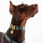 collar-leopardo-verde-perro
