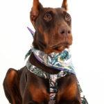 collar-perro-hojas-rosada