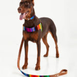 correa-maya-perro