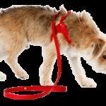 perro-arnes-rojo.png