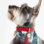 perro-collar-rojo