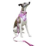 13-correa-pink-tie-dye
