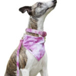 17-panoleta-pink-tie-dye