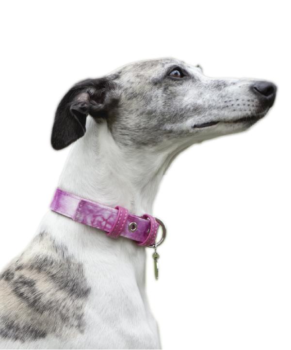 Collar Pink Tie Dye - Feroz