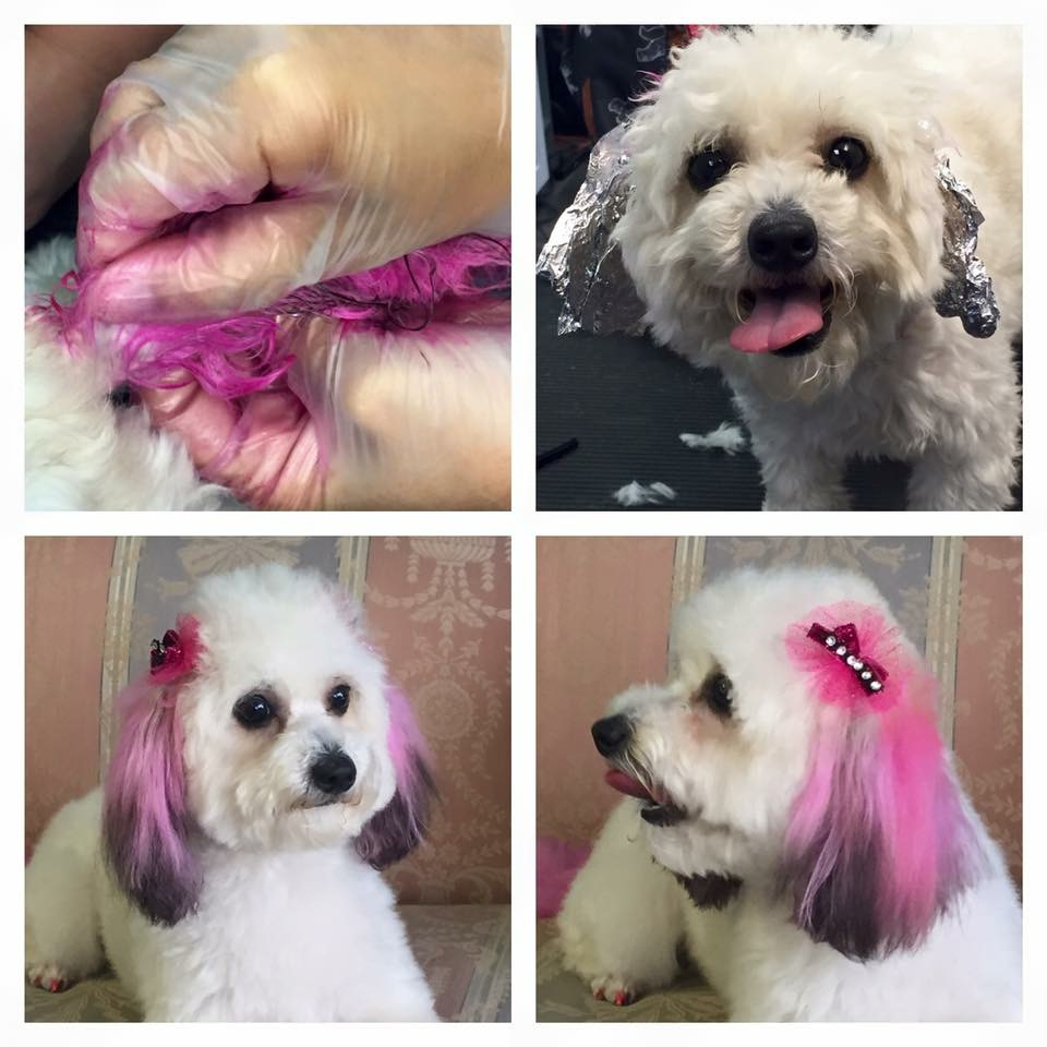 VIP Dog And Cat Grooming Salon Pet Skin Therapies In Grand Rapids Michigan 48508 Creative Pet Grooming Hair Dye Feather Extensions Accents Stenciling