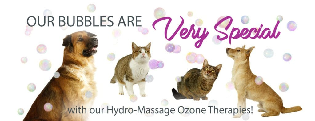 VIP Dog And Cat Grooming Salon Pet SKin Ozone Therapies For Fleas Ticks Allergies in Grand Rapids Michigan 49508