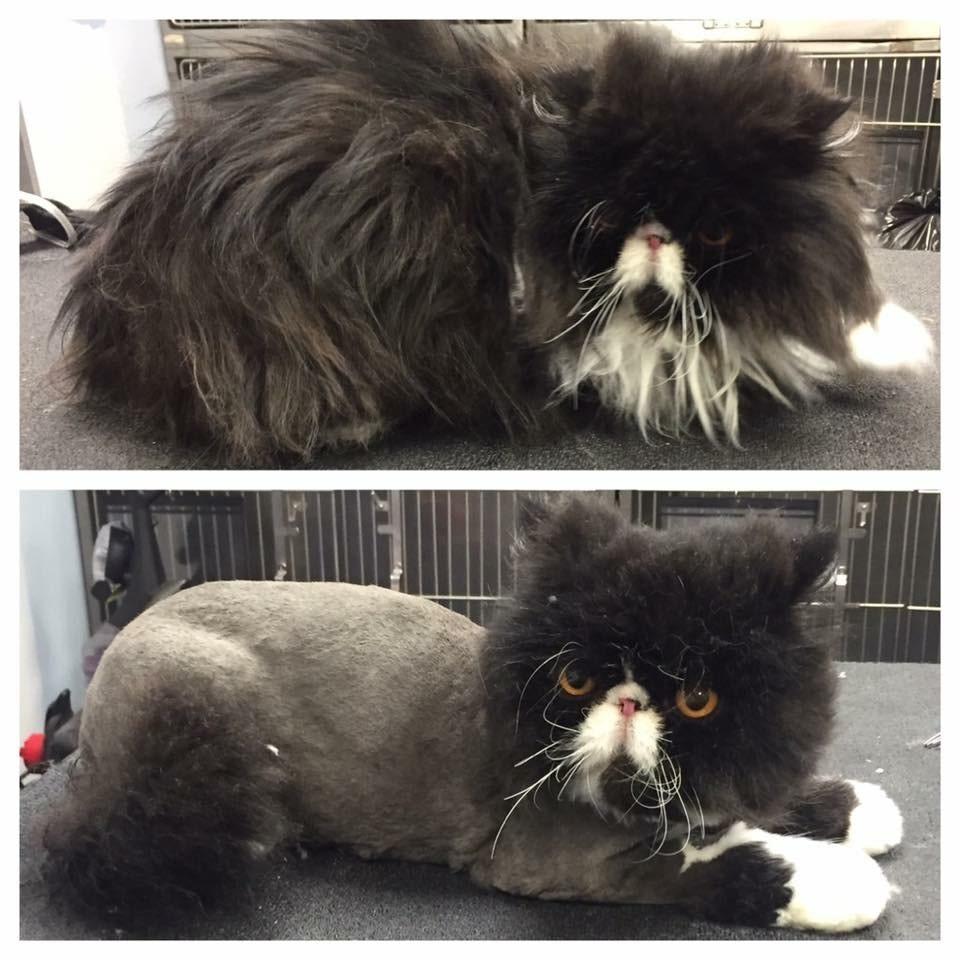 VIP Dog And Cat Grooming Salon Pet Skin Therapies In Grand Rapids Michigan 48508